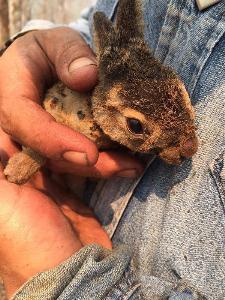 ลูกกระต่ายน้อยรอดตายจากไฟป่าเชียงใหม่ (ภาพ : Pea_SuMIT Ph.D. กลุ่มไลน์สภาลมหายใจเชียงใหม่-เขียวสู้ฝุ่น)