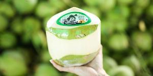 สินค้าเกษตรทางรอดประเทศช่วงวิกฤตโควิด ผู้ส่งออกมะพร้าวน้ำหอมไปจีน ออเดอร์ล้นมะพร้าวไม่พอส่งออก