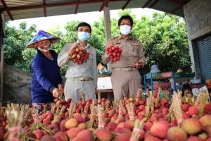 พิษโควิด-19! ชาวสวนลิ้นจี่นครพนมวอนผู้บริโภคทั่วไทยช่วยซื้อผ่านไปรษณีย์ไทย