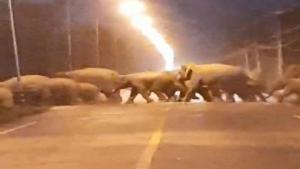 สุดตื่นเต้น! โขลงช้างป่ากว่า 40 ตัว เดินข้ามถนนสายความมั่นคงใกล้สวนป่าลาดกระทิง