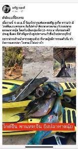 เพจ เสริฐ ภูเก็ต  ต้นเรื่องโพสต์ระบุมีนักท่องเที่ยวจีนแอบล่ายิงปลาสวยงาม (ภาพ : เพจ กรมทรัพยากรทางทะเลและชายฝั่ง)