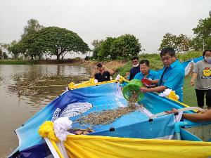 """""""เฉลิมชัย"""" สั่งกรมประมงเร่งสร้างรายได้อาชีพประมงในแหล่งน้ำชุมชน ตั้งเป้าปล่อยกุ้งกว่า 200 ล้านตัวลงแหล่งน้ำชุมชน"""