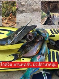 ปลาสวยงามที่ถูกนักท่องเที่ยวจีนล่ายิง (ภาพ : เพจ กรมทรัพยากรทางทะเลและชายฝั่ง)