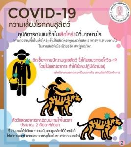 """ยืนยัน""""โควิด-19 ในเสือโคร่ง""""ยังไม่พบหลักฐานติดจาก""""สัตว์สู่คน"""" สัตวแพทย์จุฬาฯ แนะตระหนัก อย่าตระหนก"""
