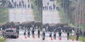 ชมโขลงช้างเดินขบวนข้ามถนนอย่างเป็นระเบียบ ชาวบ้านแห่เก็บภาพเป็นความทรงจำ