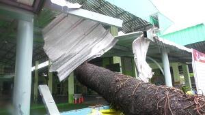 พายุฝนลมแรงใน จ.ตราด ทำต้นสนขนาดใหญ่โค่น-อุบัติเหตุรถเสียหลักตกข้างทาง