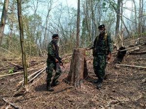 เชื้อชั่วไม่เคยตาย! ทหาร-ป่าไม้ติดอาวุธเดินดอยเป็นวัน ทลายโรงเลื่อยเถื่อนกลางป่าแม่สอด