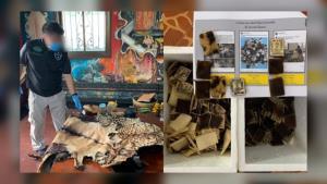 จับพ่อค้าปลุกเสกวัตถุมงคลจากซากสัตว์ป่าขายผ่านเฟซบุ๊ก พบของกลางกว่า 1,000 ชิ้น
