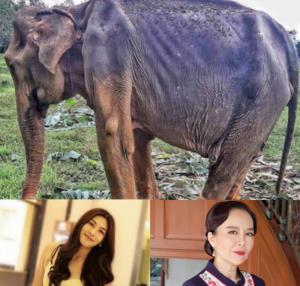 """สลดใจ! """"นุ่น-ต่าย"""" วอนช่วยช้างไทย ตอนนี้ผอมแห้ง ขาดน้ำ-อาหารขั้นวิกฤต"""