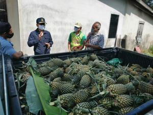 พังงาเตรียมส่งสับปะรดภูงา 3.2 ตัน แลกข้าวกับชาวยโสธร