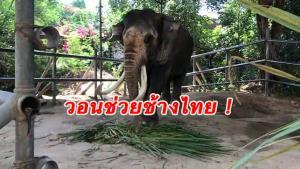 วอนช่วยช้างไทย! หมู่บ้านช้างพัทยาขอผู้ใจบุญร่วมบริจาคเงินซื้ออาหารหลังโควิด-19 ทำขาดรายได้ดูแล