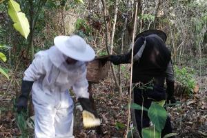 กลุ่มเลี้ยงผึ้งบ้านไหนหนังกระบี่เดือดร้อนหนัก ไร้ตลาดจำหน่าย