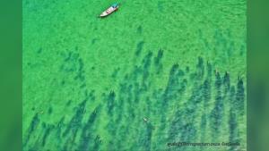 แห่แชร์! ภาพพะยูน 20 ตัว ว่ายในทะเลตรัง ชี้ทะเลสวยงามขึ้นได้หากช่วยกันดูแล
