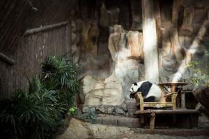 หลินฮุ่ยก็ยังสบายดีที่สวนสัตว์เชียงใหม่ (ภาพจาก Facebook : สวนสัตว์เชียงใหม่ Chiang Mai Zoo)