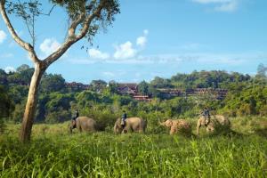 โควิด-19 กระเทือนช้างไทย คนเลี้ยงช้างสู้ด้วยใจ คนรักช้างบริจาคได้ตามศรัทธา