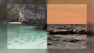 ดร.ธรณ์ สุดดีใจ! อวดภาพฝูงฉลามหูดำ-วาฬเพชฌฆาตเพิ่ม ย้ำมนุษย์หายไป ทะเลยิ่งใหญ่จริงๆ (ชมคลิป)