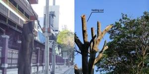 วิจารณ์สนั่น! ตัดต้นไม้ถนนวิทยุเหลือแต่ตอ หนุ่มโพสต์เดือดเป็นวิธีตัดต้นไม้ที่แย่ที่สุด