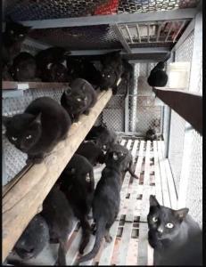 หมอแล็บเตือน! อย่าหลงเชื่อ ซุปแมวดำไม่สามารถรักษา-ป้องกัน Covid-19 ได้