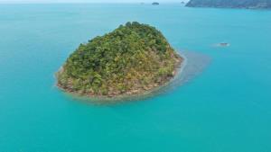 """เผยภาพ """"ฝูงโลมาอิรวดี 10 ตัว"""" สัตว์ใกล้สูญพันธุ์โผล่ว่ายน้ำที่เกาะช้างสนุกสนาน"""