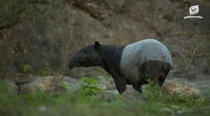 สัตว์ดึกดำบรรพ์ที่ใกล้สูญพันธุ์ (ภาพ : เว็บไซต์มูลนิธิสืบนาคะเสถียร)
