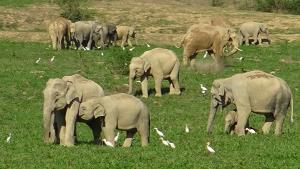 ปิดอุทยานฯ กุยบุรีกว่า 1 เดือน ส่งผลดีต่อช้าง-กระทิงกว่า 200 ตัวออกมาใช้ชีวิตตามธรรมชาติ