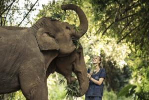 มิติใหม่ช้างไทย โชว์สดผ่านเฟซบุ๊กไลฟ์ คนดูช่วยเหลือได้ตามจิตศรัทธา