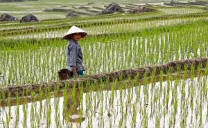 ก.อุตสาหกรรมเวียดนามชงรัฐฟื้นส่งออกข้าวเต็มพิกัดตั้งแต่เดือน พ.ค.