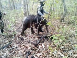 พบลูกช้างป่าหลงแม่ที่ห้วยขาแข้ง (ภาพ เพจ ประชาสัมพันธ์ กรมอุทยานแห่งชาติ สัตว์ป่า และพันธุ์พืช)