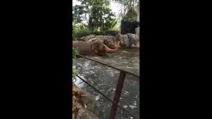 """โคตรฟิน!! คลิป """"ช้างไชโย"""" เริงร่าเล่นน้ำหยอกล้อเล่นกล้องสนุกช่วงสวนสัตว์เชียงใหม่ปิดโควิด-19"""