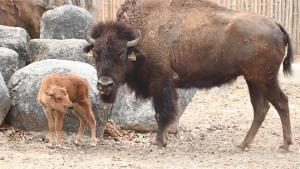 เชียงใหม่ไนท์ซาฟารีผุดช่องออนไลน์ อวดโฉมลูกสัตว์เกิดใหม่เพียบช่วงอยู่บ้านหยุดเชื้อเพื่อชาติ