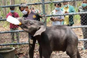 ลูกช้างป่าหลงแม่ที่ห้วยขาแข้ง (ภาพ : เพจ ประชาสัมพันธ์ กรมอุทยานแห่งชาติ สัตว์ป่า และพันธุ์พืช)
