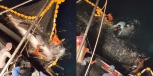 """ชื่นชมชาวประมง! ช่วยปล่อย """"ฉลามวาฬ"""" ติดอวน 6 ตัว คืนท้องทะเล สะท้อนความอุดมสมบูรณ์ของทะเลไทย"""
