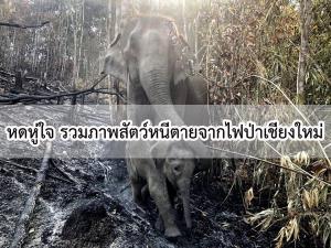สุดสลดใจ รวมภาพสัตว์ป่าหนีตายจากไฟป่าเชียงใหม่