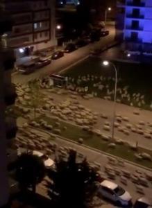 ทีของข้า! ฝูงแกะนับพันบุกยึดเมืองตุรกี หลังมนุษย์อยู่ใต้คำสั่งล็อกดาวน์ (ชมคลิป)