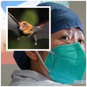 """""""มนุษย์ค้างคาวหญิงแห่งเมืองจีน""""  สือเจิงลี่ นักไวรัสวิทยาผู้ตกเป็นเหยื่อทฤษฎีสมรู้ร่วมคิด? (ตอนที่หนึ่ง)"""