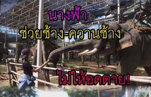 """""""หนึ่ง บางปู"""" ก่อนบ่ายฯ ทำดีรับวันวิสาฯ ช่วยชีวิตควาน-ช้าง 21 เชือก ไม่ให้อดตายจากพิษโควิด"""