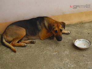 เจ้าสำนักสงฆ์ห้วยปริงร้องช่วยเหลือบริจาคอาหารหมาแมว หลังได้รับผลกระทบจากโควิด-19