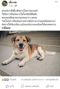 """เจอแล้ว! """"พี่เตี้ย"""" สุนัขเซเลบชื่อดัง มช. กลายเป็นซากถูกทิ้งเน่าริมป่า-คนรักหมาแห่อาลัยน้ำตานองโลกโซเชียล"""