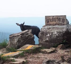 """""""วราวุธ"""" ผุดไอเดีย ปิดการท่องเที่ยวในอุทยานแห่งชาติทุกปี หลังสัตว์ป่าเริงร่าช่วงโควิด-19"""