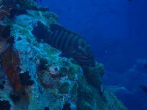 ทช.ส่งทีมสำรวจแหล่งดำน้ำเกาะเต่า ยันมีความสมบูรณ์สัตว์น้ำยังอยู่หนาแน่น