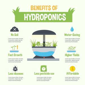 อวานี โฮเทลส์ แนะวิธีปลูกผักไฮโดรโปนิกส์แบบง่ายๆ
