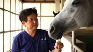 สัตวแพทย์รับกาฬโรคแอฟริกาในม้า ระบาดในไทยวิกฤตที่สุดวงการม้าไทย
