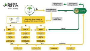 MQDC สร้างงานให้ชุมชนจ่าย 15,000 บาท 1,000 ครอบครัวดูแลกล้าไม้ 1.2 ล้านต้นสู้วิกฤต