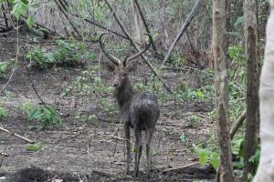 เตรียมวางแผนปิดป่าอย่างน้อย 2 เดือน หลังพบทั้งผืนป่า-สัตว์ป่ากลับมาอุดมสมบูรณ์หลังปิดช่วงโควิด-19