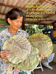 """""""จ จานใจดี"""" จานใบไม้รักษ์โลก กิจกรรมคลายเหงา สร้างรายได้ให้ผู้สูงอายุ"""