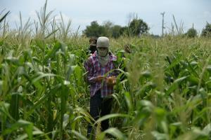 กองพล.ร.9 ค่ายสุรสีห์จัดกำลังพลรับซื้อพืชผลผลิตเกษตรกร บรรเทาโควิด-19 ตามนโยบาย ผบ.ทบ.