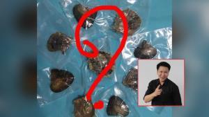 """อ.เจษฎ์ วอนอย่าหลงเชื่อไลฟ์ขาย """"หอยมุก"""" ชี้ไม่ใช่มุกชนิดหายาก แถมราคาสูงเกินจริง"""