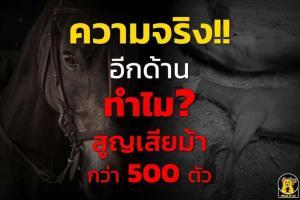 'ปศุสัตว์' แจงข้อเท็จจริง!! กาฬโรคม้า ทำไม? ม้าตายกว่า 500 ตัว