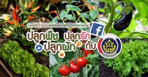 รวมพลังคนไทย พลิกฟื้นผืนดิน ปลูกผักสวนครัว สร้างความมั่นคงทางอาหาร ลดค่าใช้จ่าย สู้ภัยโควิด-19