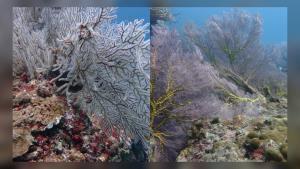 ชื่นชม! ความงามเกาะยูง หลังปิดฟื้นธรรมชาติ ครบรอบ 4 ปี ปะการังเพิ่มขึ้นอย่างชัดเจน (ชมคลิป)